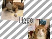 My story This handsome guy is Tigger!! He is a 2 year