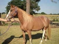 Blaze is a very good trail horse. She is husband and
