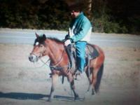 Shantzee is a 13 hand tall Bay Pony Mare with rear