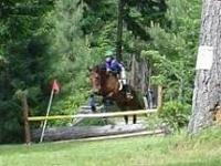13 year old 17.1hh, off the track thoroughbred mare.
