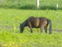 Scenic Navajo, is an 14 year old Bay/Paint Mare Horse.