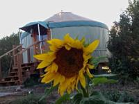 2 casitas, one 20' yurt, chicken coop and pen, a lot of