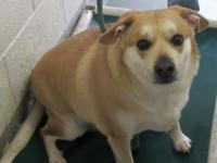 Poor Moes was left at the shelter by his owners.  He is