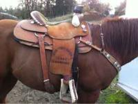 "15"" Billy Cook trophy saddle & Classic Equine felt pad"