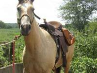 When i bought this saddle I was told it was 16 inches.