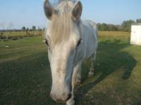 Charlie is a 15 y/o,16.1 hh purebred Percheron gelding.