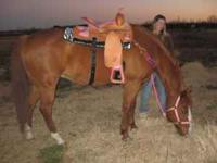 i have a 15 yr old quarter horse fast friendly stands