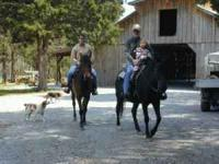 Come ride the hills of Tennessee on the back of a horse