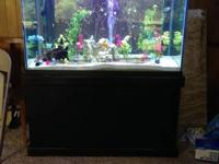 Aquarium setup for sale. Setup is less than a month