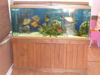 Aquarium : size 150 gallon wood cabinet, Rena Flistar