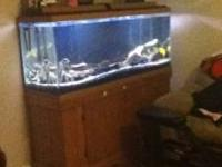Awesome fish tank. Comes with every thing you need.