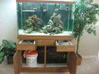 Beautiful 150 gallon fish tank, custom made solid oak