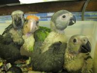 15th Annual Bird Mart, Sunday March 10 9-4:00 (Sunday