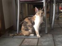 We need to rehome a Pastel Calico Devon Rex who was