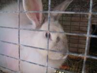 I am selling 16 rabbits in total, 13 of them are babys