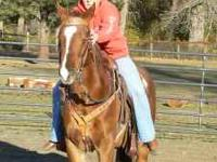 16 year Old Quarter Horse. He has had training in round