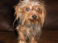Peanut is a very sweet 1.5 year old proven male stud