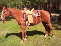 This mare is a Reg 1993 APHA sorrel/solid breeding