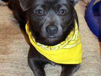 #180395, Cary is the outgoing 1-3 yr old female