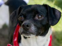 180583 Willy: Willy is a Terrier mix boy who is one to