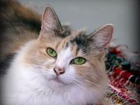 181556 Lilly's story #18155 - My name is Lilly and I an