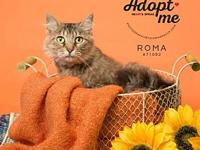 181569 Roma's story Roma (#71092) is a beautiful,