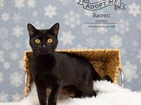 181824 Raven's story Raven is a very loveable one-year
