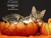 182220 Expresso's story Espresso is a ten-month old (as