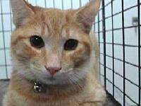 19-05779's story 19-05779 Domestic Short Hair Orange