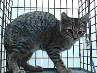 19-09225's story 19-09225 Domestic Short Hair Brown