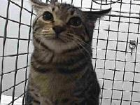 19-09226's story 19-09226 Domestic Short Hair Brown