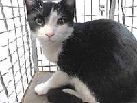 19-10530's story 19-10530 Domestic Short Hair