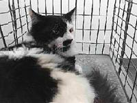 19-11168's story 19-11168 Domestic Long Hair