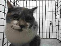 19-11287's story 19-11287 Domestic Short Hair