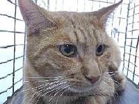 19-11422's story 19-11422 Domestic Short Hair Orange