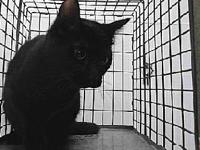 19-11607's story 19-11607 Domestic Short Hair Black