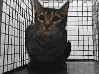 19-11608's story 19-11608 Domestic Short Hair Brown