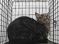 19-11609's story 19-11609 Domestic Short Hair Brown
