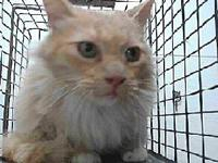 19-11732's story 19-11732 Domestic Long Hair Peach