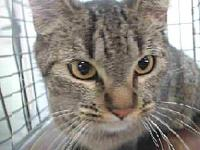 19-12297's story 19-12297 Domestic Short Hair Brown