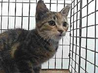 19-12557's story 19-12557 Domestic Short Hair Brown