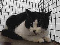 19-12653's story 19-12653 Domestic Short Hair