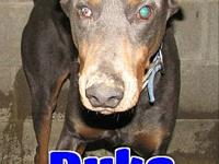 #19 Duke's story 'Hello. My name is Duke and I came