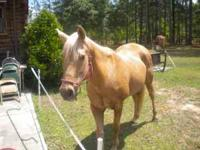 19 yo Polomino Mare. Great ground manners,neck rein,