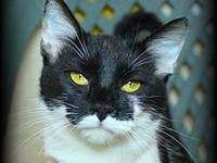My story Luna is a sweet, three-year old female cat in
