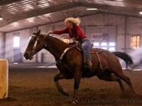 15 year old beautiful bay Quarter Horse mare. She runs