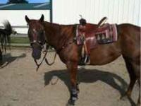 Red is a 1d barrel mare needs a little more work when i