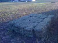 Small square bales of first cut alfalfa mix hay.. No