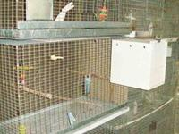 """These cages have 1/2"""" x1"""" galvanized wire, with wire"""