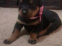 I got 2 beautiful female Rottweiler puppies left they